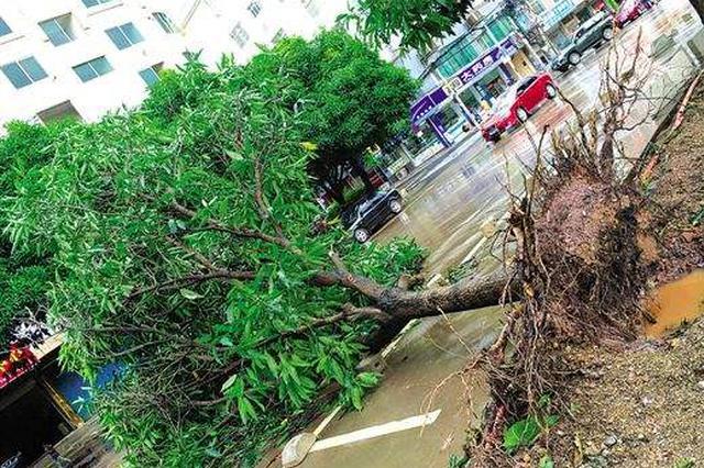 南宁园林部门及时应急 迅速处置倒伏断枝倾斜树木