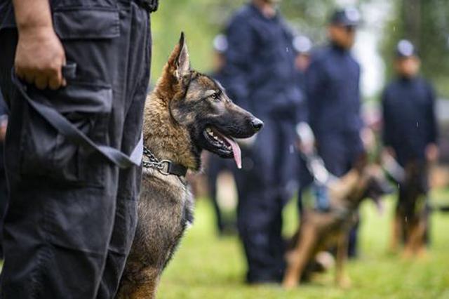 """我国首只警用工作克隆犬""""昆勋""""正式入警"""