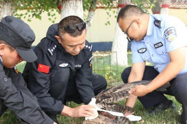 新疆边防民警巡逻 救助受伤国家二级保护动物草原雕