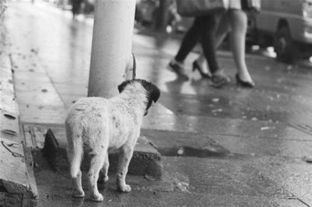 超过14天无人领养犬只可实施安乐死?你怎么看?
