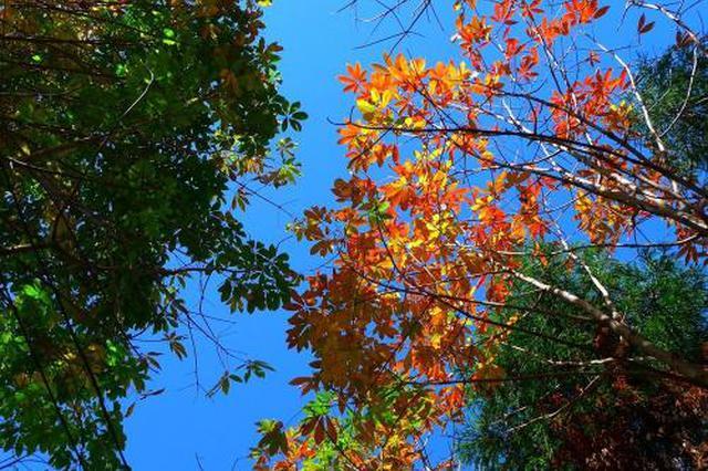 秋高气爽!未来3天广西降雨稀少 有冷空气但影响不大