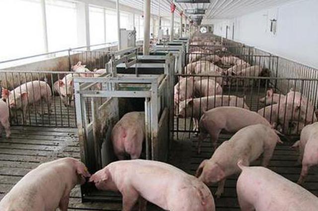 市面上存在非洲猪瘟商品化疫苗?农业农村部辟谣