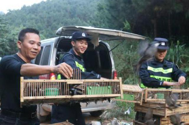 广西崇左警方边境查获野生鸟类1200只 全部放生自然