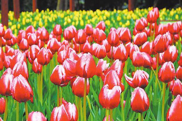 迎春祈福好去处!春节到青秀山看花赏灯 天天有惊喜