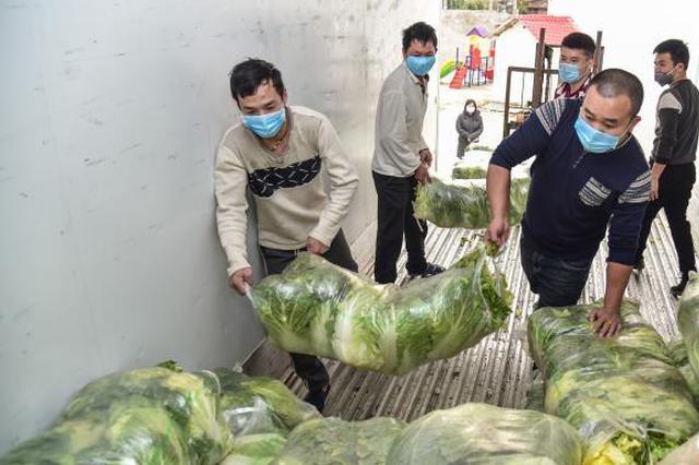 暖心!广西柳州村民向雷神山医院捐赠蔬菜15吨