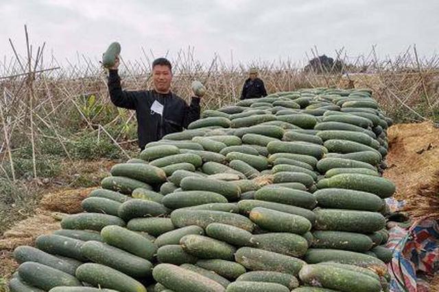 他曾为武汉捐赠10万斤毛节瓜 如今地里200万斤瓜滞销