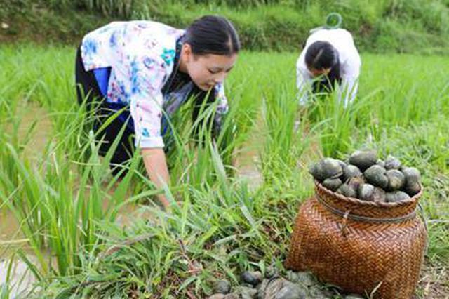柳州2020年将新增螺蛳养殖2万亩 满足螺蛳粉产业需求