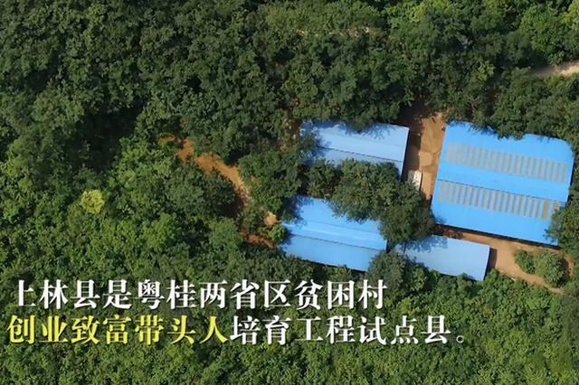 千名记者一线行|上林:致富带头人领路 贫困户脱贫