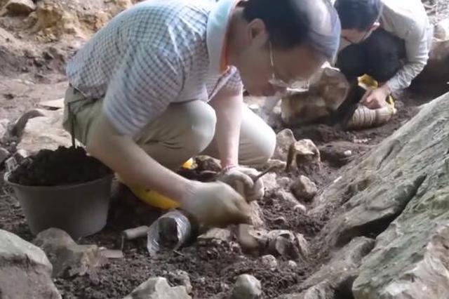 广西隆安娅怀洞遗址考古发现16000年前人头骨化石