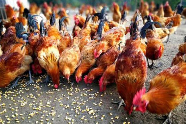 北流一男子疑因偷鸡遭村民捆绑殴打 警方:正在核实