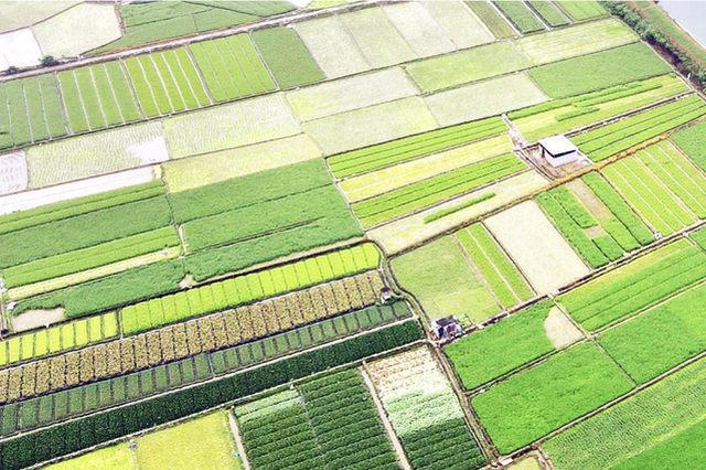 南宁:谷雨至 农事忙