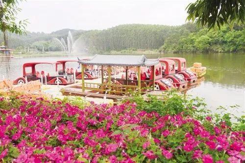 这是广西最大的玫瑰花园!快来畅游美丽花雨湖
