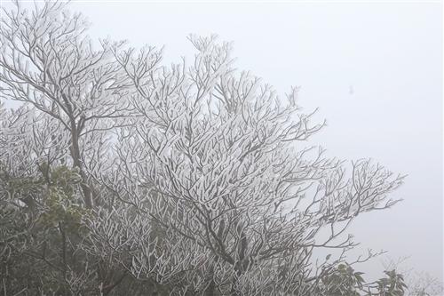 大明山上出现雾凇美景,处处玉树琼花,宛如仙境 本报通讯员 陆雯霞 摄