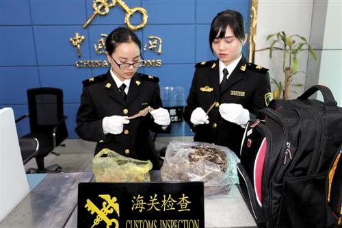 东兴海关旅检关员从行李物品中检查出两袋海马干(海关供图)