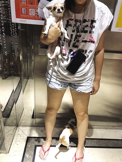 ▲市民带狗乘坐电梯,狗狗未拴绳