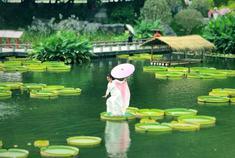 青秀山水生花卉展开幕
