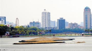 南宁南湖公园四个生态岛雏形初显