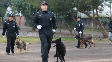 这些帅萌的警犬将守护广西春运安全