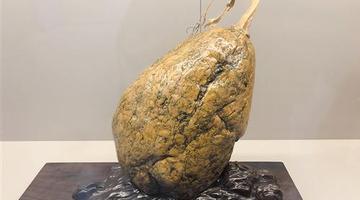 600余件观赏石精品在南宁园博园展出
