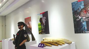 南宁:这些走私展品暗藏血泪杀戮