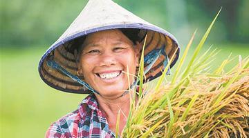 """厉害了!北海千亩""""海水稻""""试种成功"""