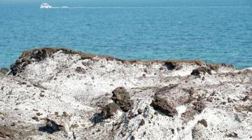 涠洲岛火山岩被海盐附体如雪景