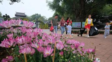 美爆了!南宁上百种菊花吐蕊盛开