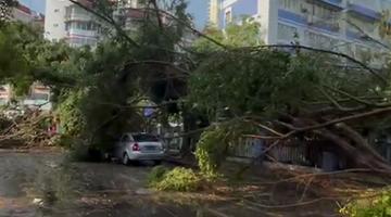 一场暴雨南宁多棵大树被风吹倒
