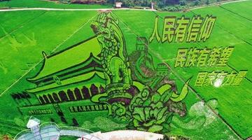 广西稻田绝美风光迎中国农民丰收节