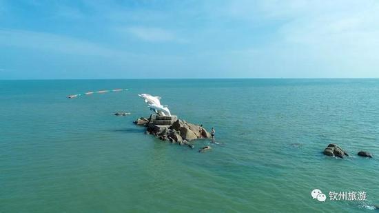 最近三娘湾频频惊现白海豚 你还不快去偶遇(图)