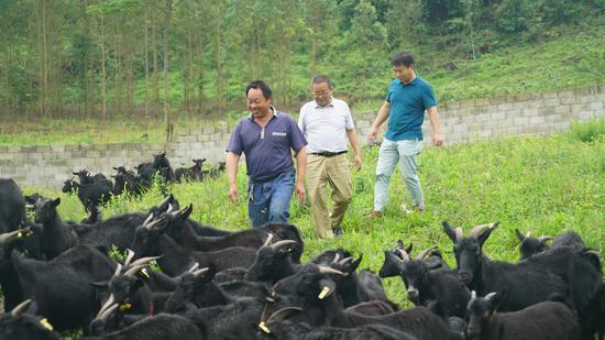 大力发展黑山羊养殖业