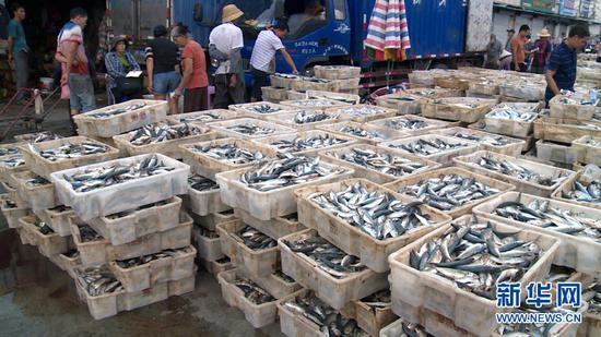9月18日傍晚,在广西北海市侨港镇电建渔港,海产品正在等待装车,运往全国各地。