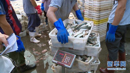9月18日傍晚,在广西北海市侨港镇电建渔港,海产品正在过磅称重。