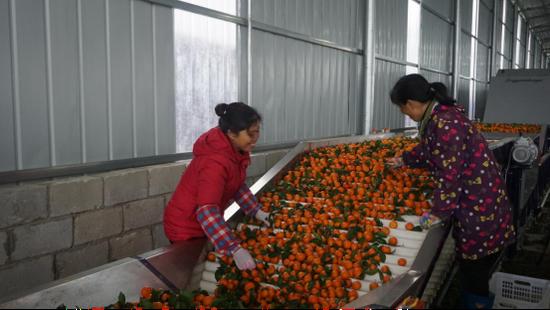 广西鹿寨水果采后处理项目 助力农业乡村振兴发展