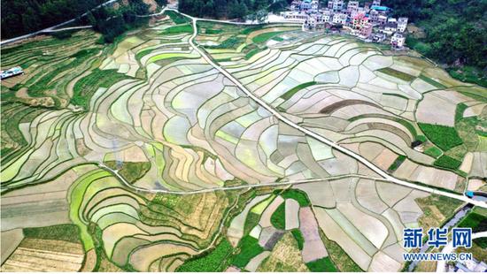 4月13日,空中俯瞰广西河池市都安瑶族自治县吉隆梯田,美轮美奂。(无人机照片)。新华网发 高东风 摄