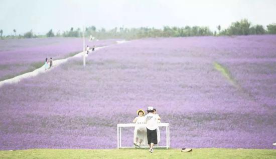 广西的这片紫色花海近日刷爆抖音!美翻了(图)