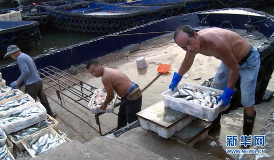 9月18日傍晚,在广西北海市侨港镇电建渔港,工人正在从渔船上卸载海产品。