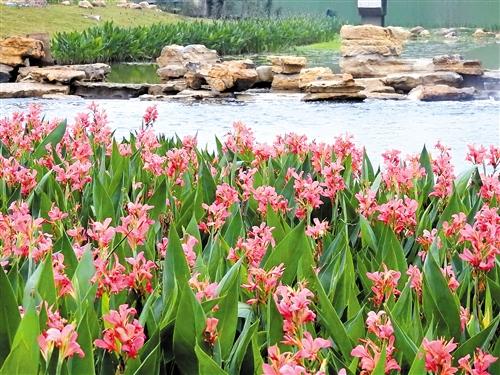 去年底,沙江河流域综合治理PPP项目竣工,昔日小黑河变身美丽生态公园 本报记者 赖有光 摄(资料图片)