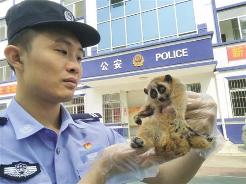 那艾边境派出所民警仔细查看蜂猴 本报通讯员 蔡铮 摄