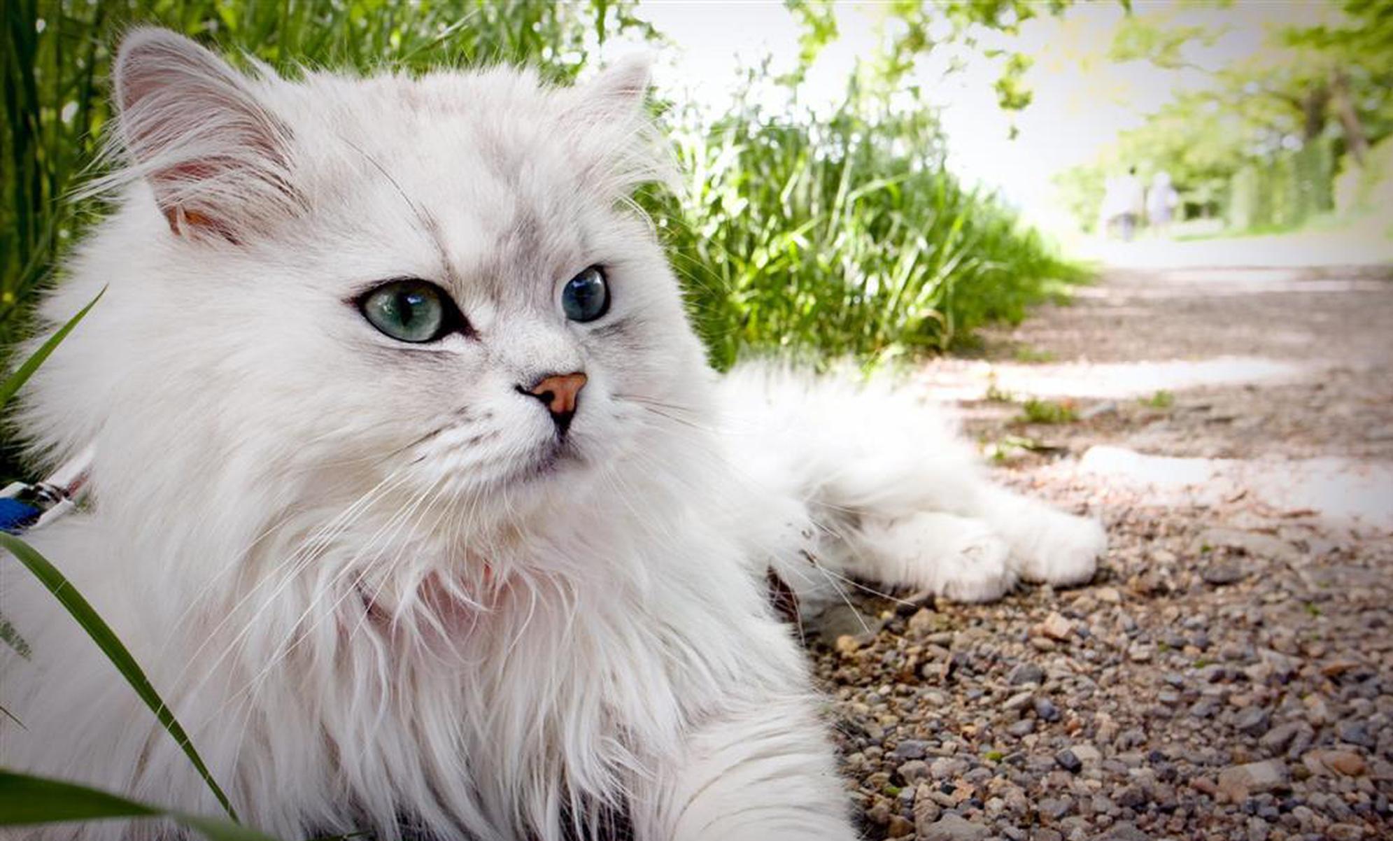 几十只猫寻找照料员工 希腊照料猫职位遭全球疯抢