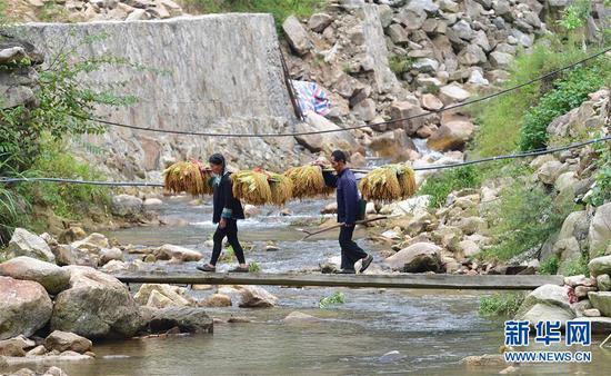 在黔桂乌英苗寨,村民挑着谷子回家(9月3日摄)