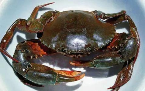广西再上央视!这次是因为钦州青蟹 你吃过吗