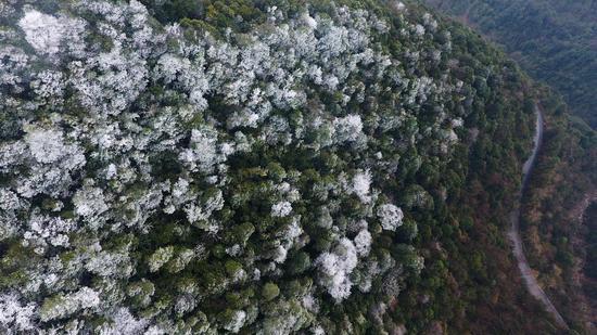 """九万山国家级自然保护区惊现""""冰琥珀""""(图)"""