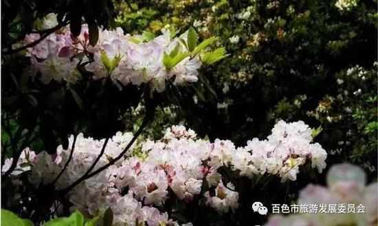 春日踏青的不二选择!走进梦幻田林 爬桂西第一高峰