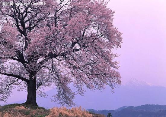 广西春季花海模式已经开启 赏花看这里(图)