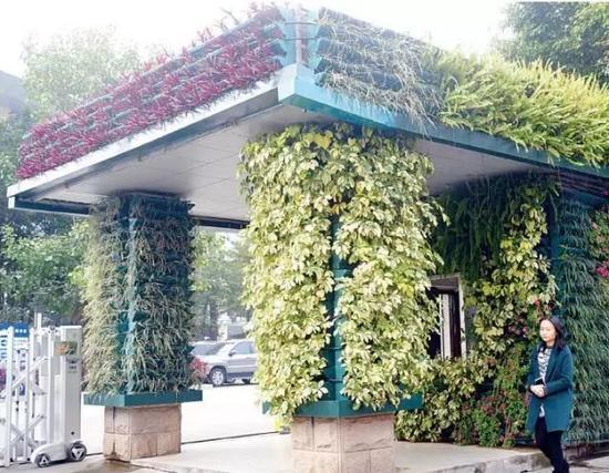 让植物爬墙上顶 南宁至今年底将新增20万㎡立体绿化