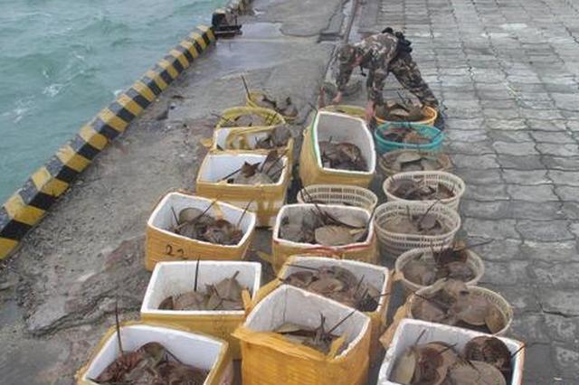 广西查获276只国家二级保护动物东方鲎(多图)
