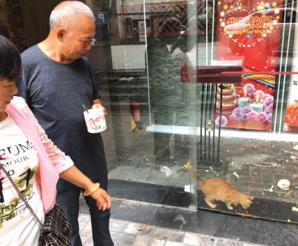 贵阳:猫咪被困半月 好心市民轮流送猫粮