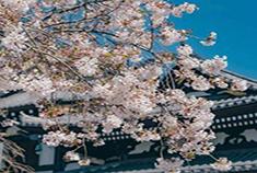 晴空万里的日本镰仓