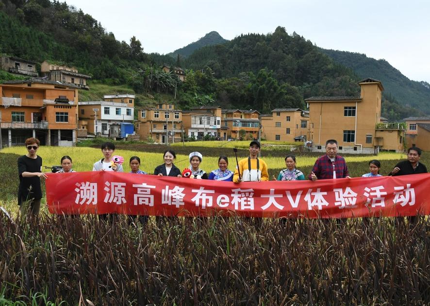 溯源高峰布e稻,探寻一粒米的成长